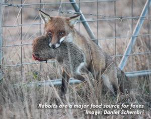 Fox&Rabbit