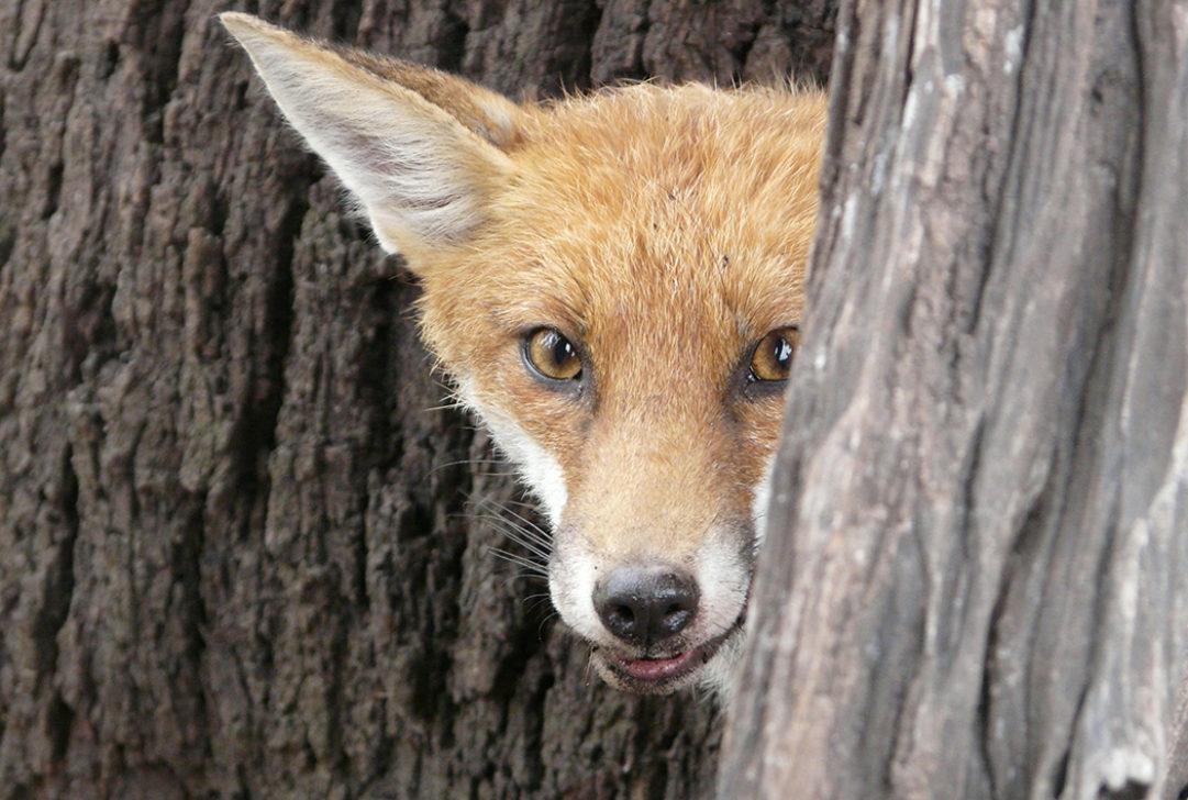 Darren-MARSHALL_fox-WEB