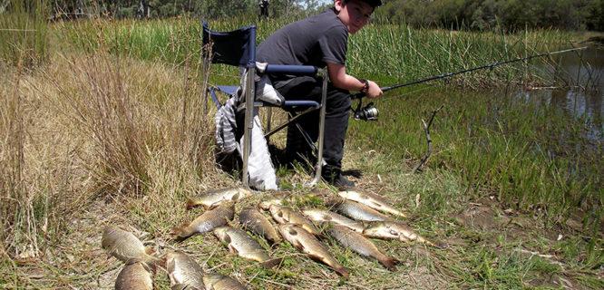 Daryl PANTHER-carp fishing