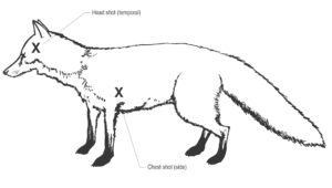 Diagram1a-fox-shoot