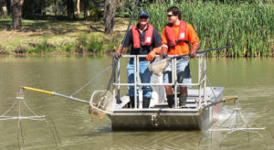 Electrofishing-operation-in-the-Lachlan-River-catchment-NSW. Imag by NSWDPI