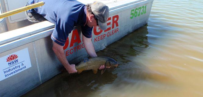 Martin Asmus NSWDPI-radio tagged carp