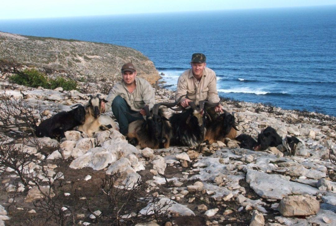 Pip Masters-KI goats taken