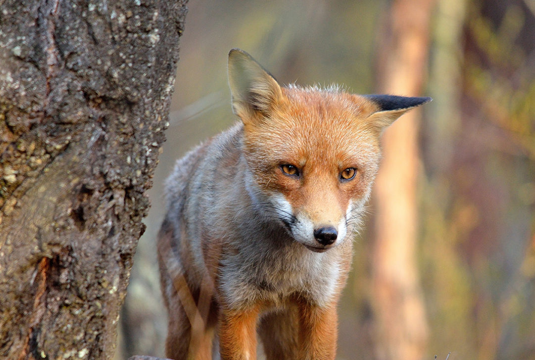 Wayne Hillier-Fox