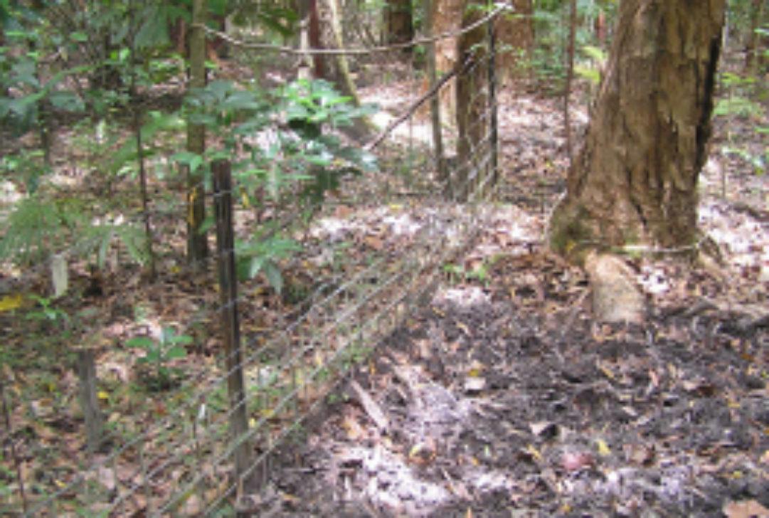 steve lapidge-fenced plots