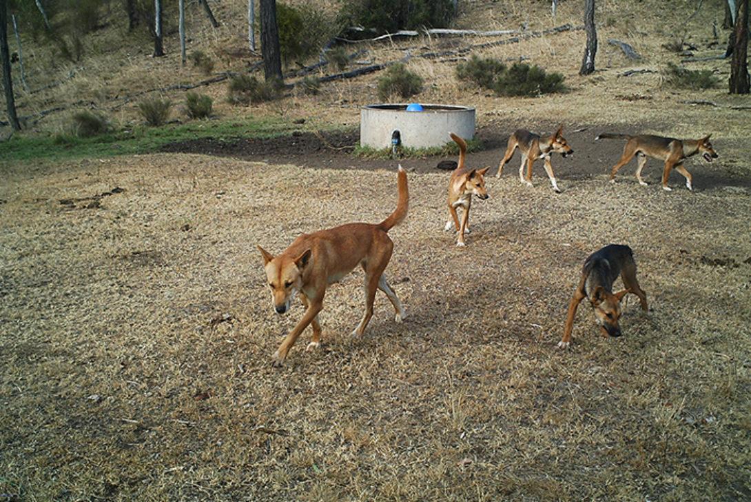 wild dogs-John Smith